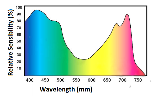 Figure 2 - Typical absorption spectrum of a plant
